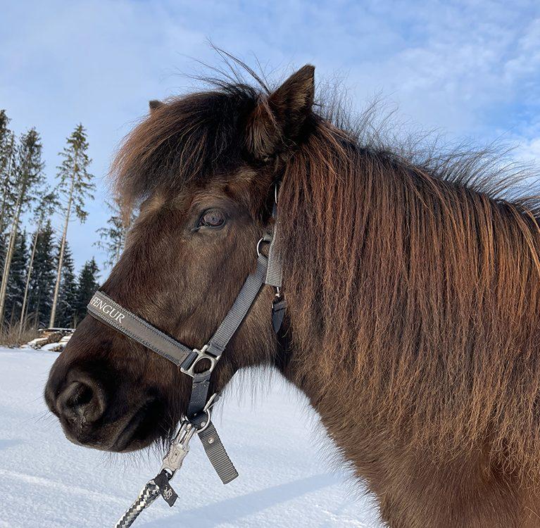 Führungskräfte Coaching mit Pferd